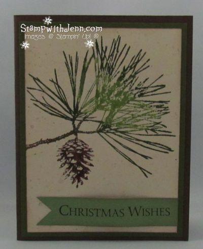 Ornamental-pine